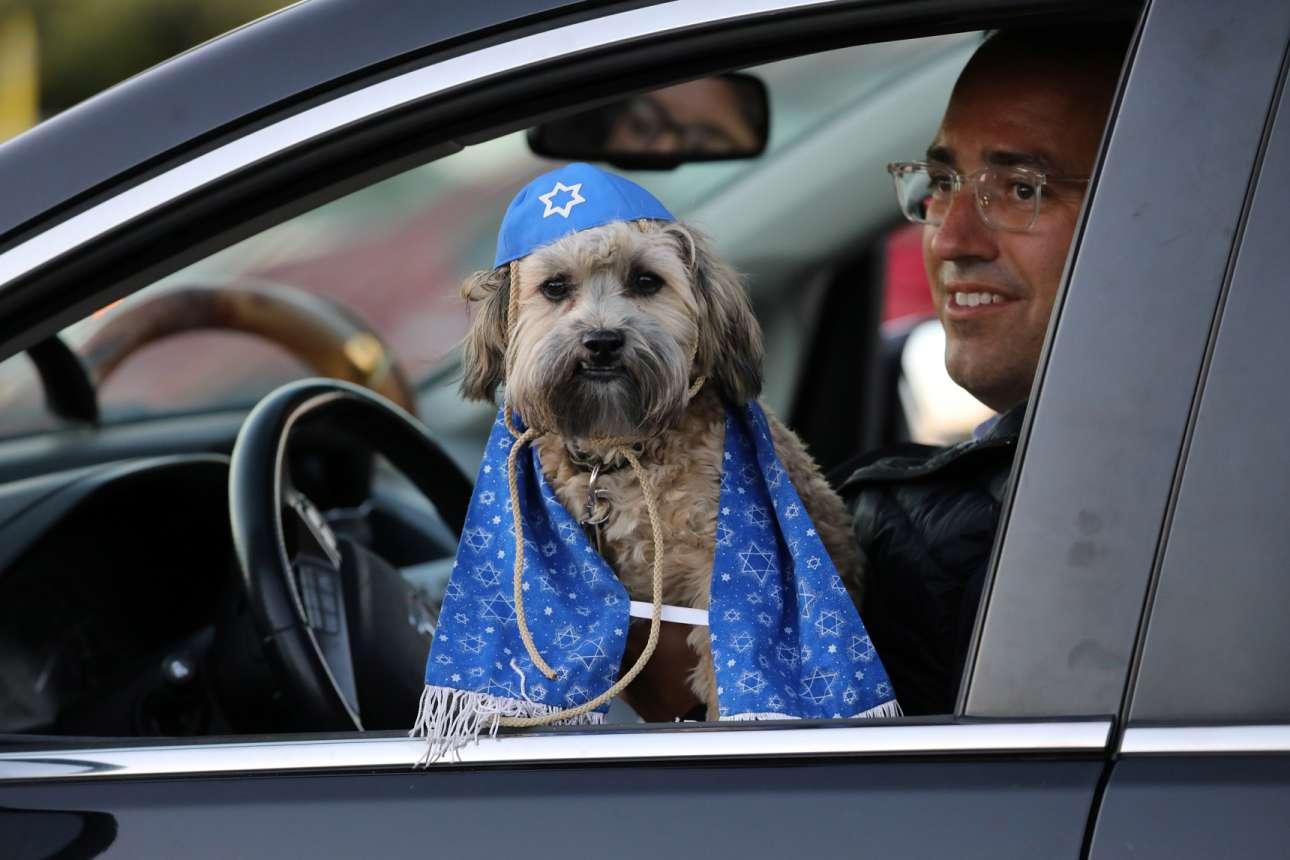Τορόντο. Μεγάλη γιορτή (την «Εβραϊκή Πρωτοχρονιά» ή «Ρος Χασανά») γιόρτασε ο οδηγός του αυτοκινήτου, αλλά ενθουσιάστηκε τόσο που φόρεσε και στο σκυλάκι του κιπά