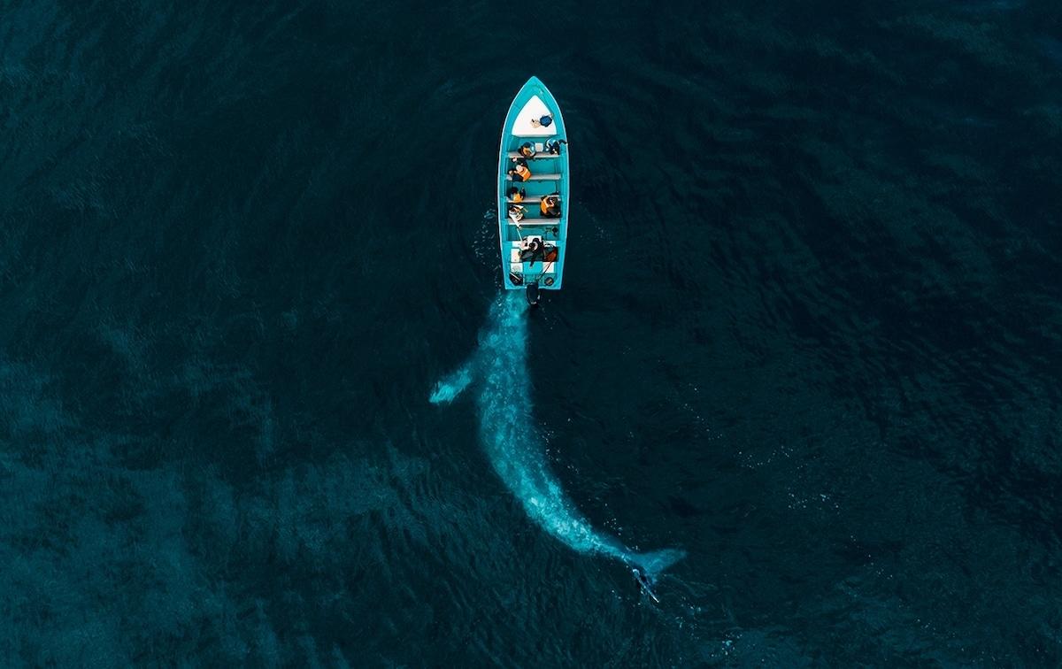 Νικητής στην κατηγορία φύση: Γκρίζα φάλαινα παίζει κάτω από μια βάρκα με τουρίστες