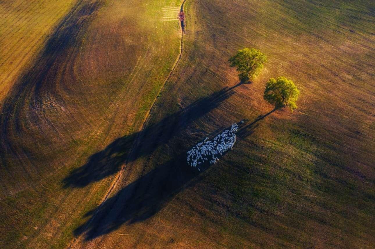 «Το Παιχνίδι των Σκιών»: Δέντρα στην Τοσκάνη