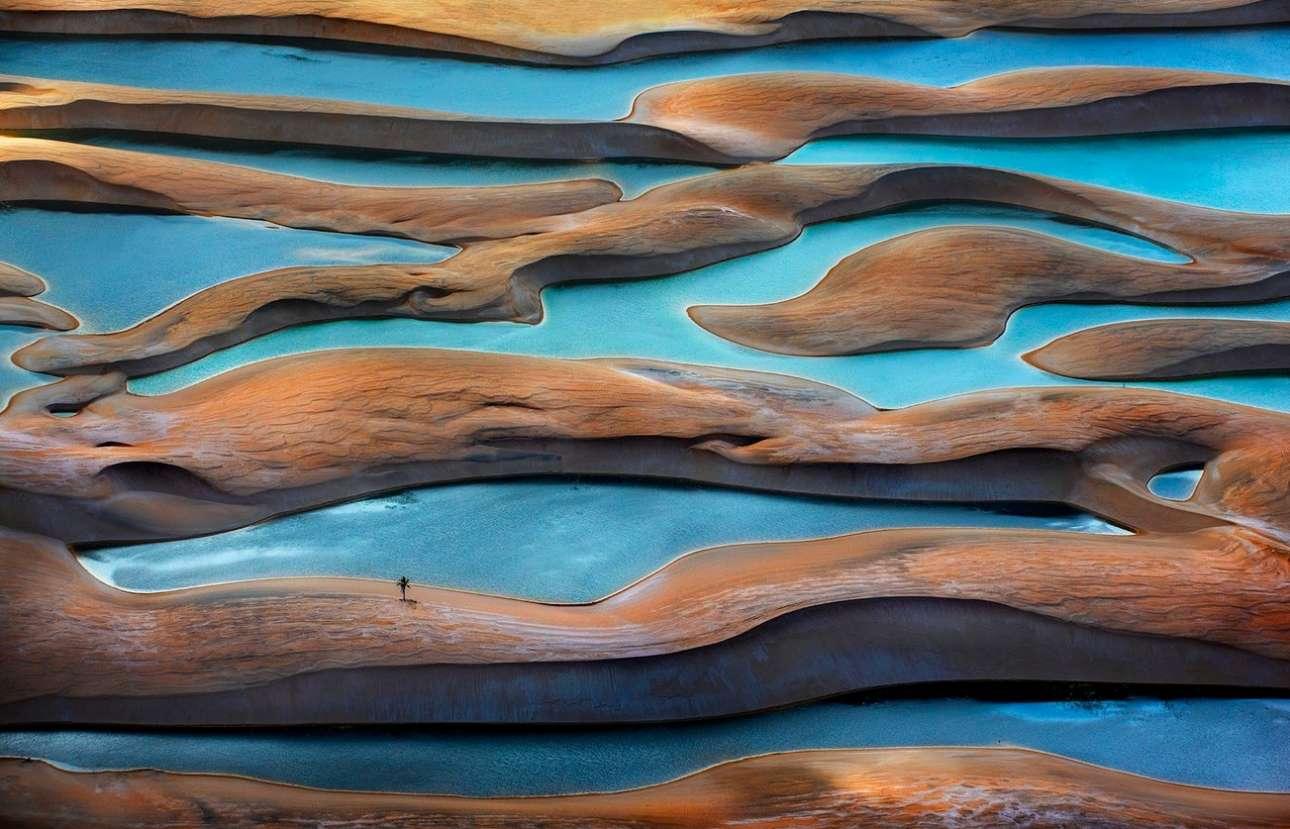 Βραβείο στην κατηγορία «Ωκεανοί, Θάλασσες, Ποτάμια, Λίμνες». Ενα μοναχικό δέντρο επιβιώνει ανάμεσα στους αμμόλοφους, στο Εθνικό Πάρκο Lençóis Maranhenses της Βραζιλίας