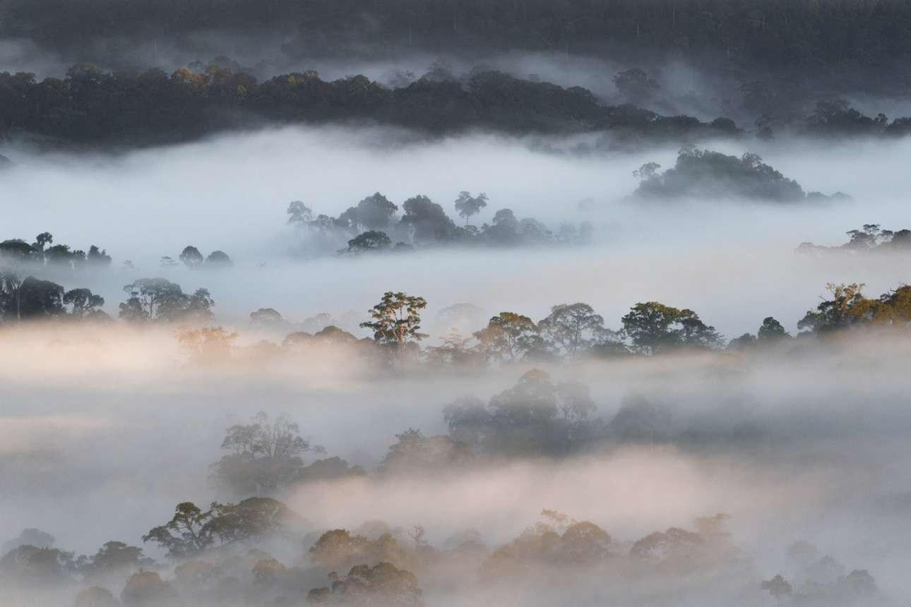 Βραβείο στην κατηγορία «Νεαρός Ταξιδιωτικός Φωτογράφος». Σύννεφα περικυκλώνουν τα δέντρα στην κοιλάδα Ντανούμ της νήσου Μπόρνεο, στη Μαλαισία