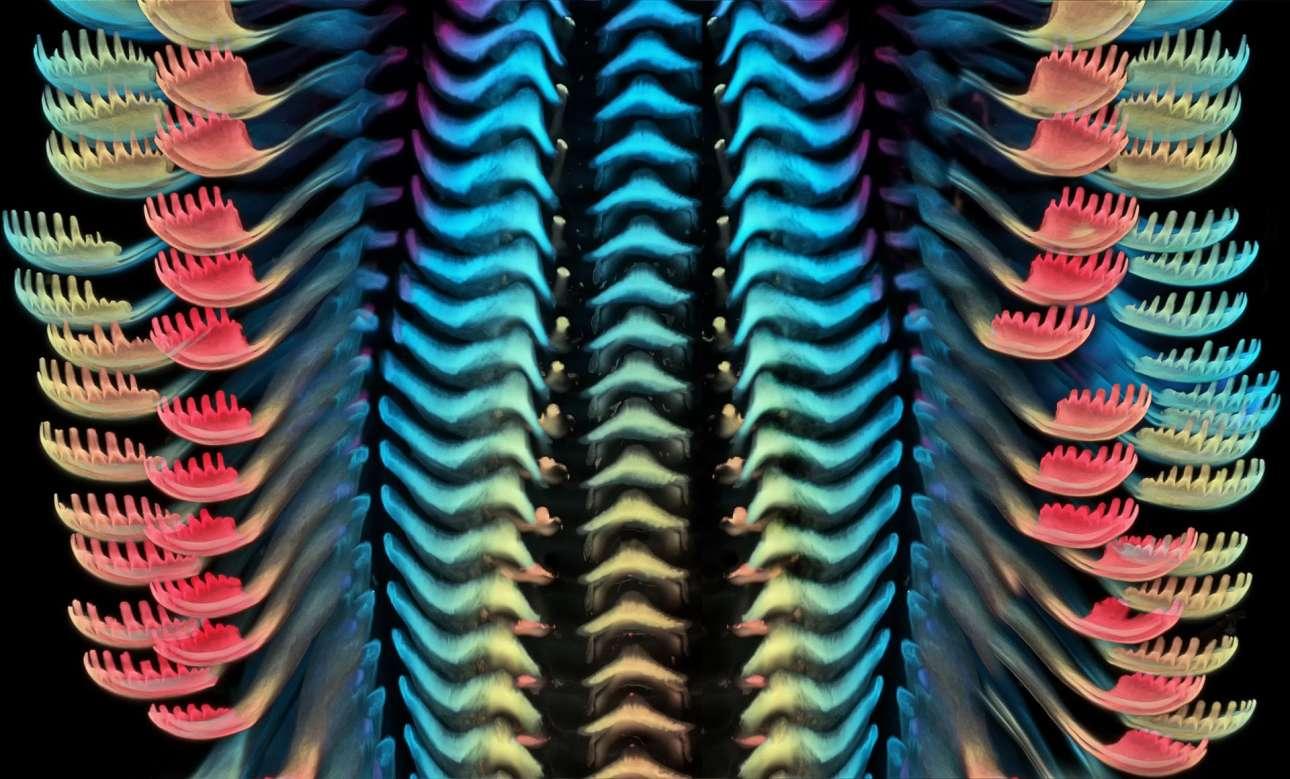 Την τρίτη θέση στον διαγωνισμό κατέλαβε η εικόνα της γλώσσας ενός θαλάσσιου σαλιγκαριού, την οποία κατέγραψε ερευνητική ομάδα του Ιατρικού Ινστιτούτου Χάουαρντ Χιουζ στις ΗΠΑ