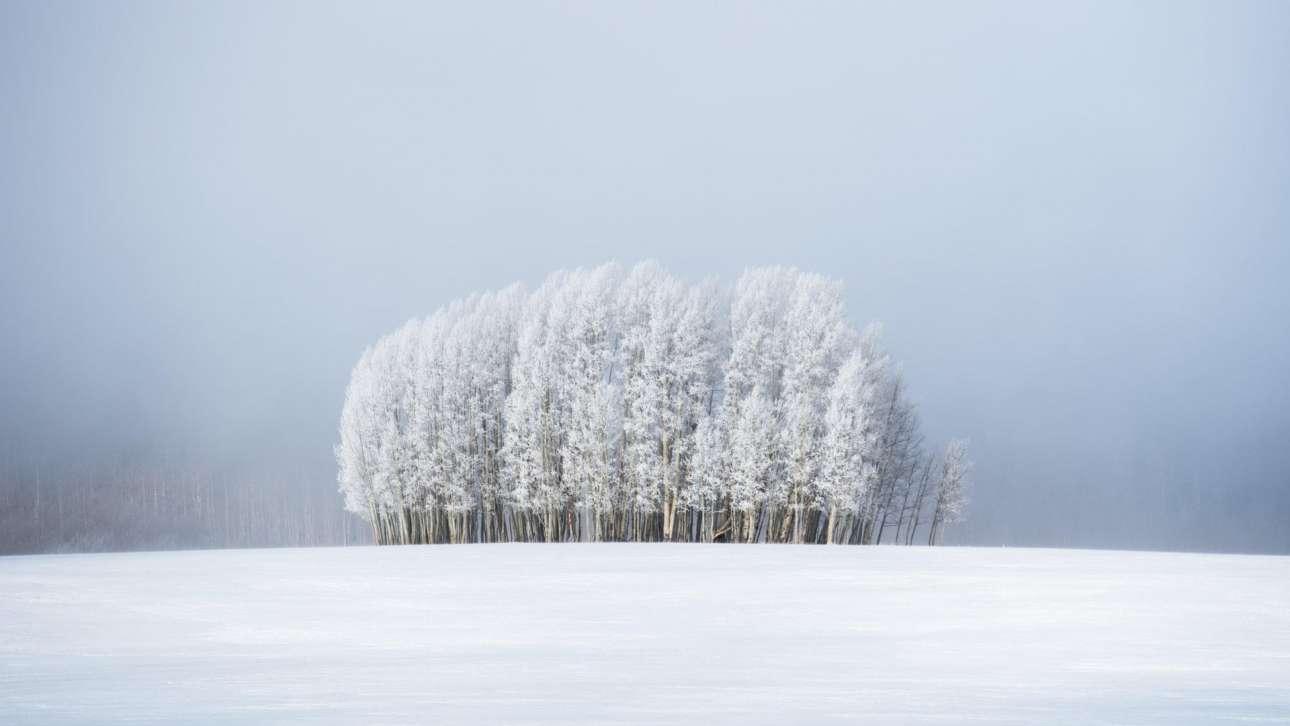 Χιονισμένα δέντρα μέσα στην ομίχλη, στο κατάλευκο παγωμένο τοπίο του Κολοράντο, σε ένα παραμυθένιο καρέ