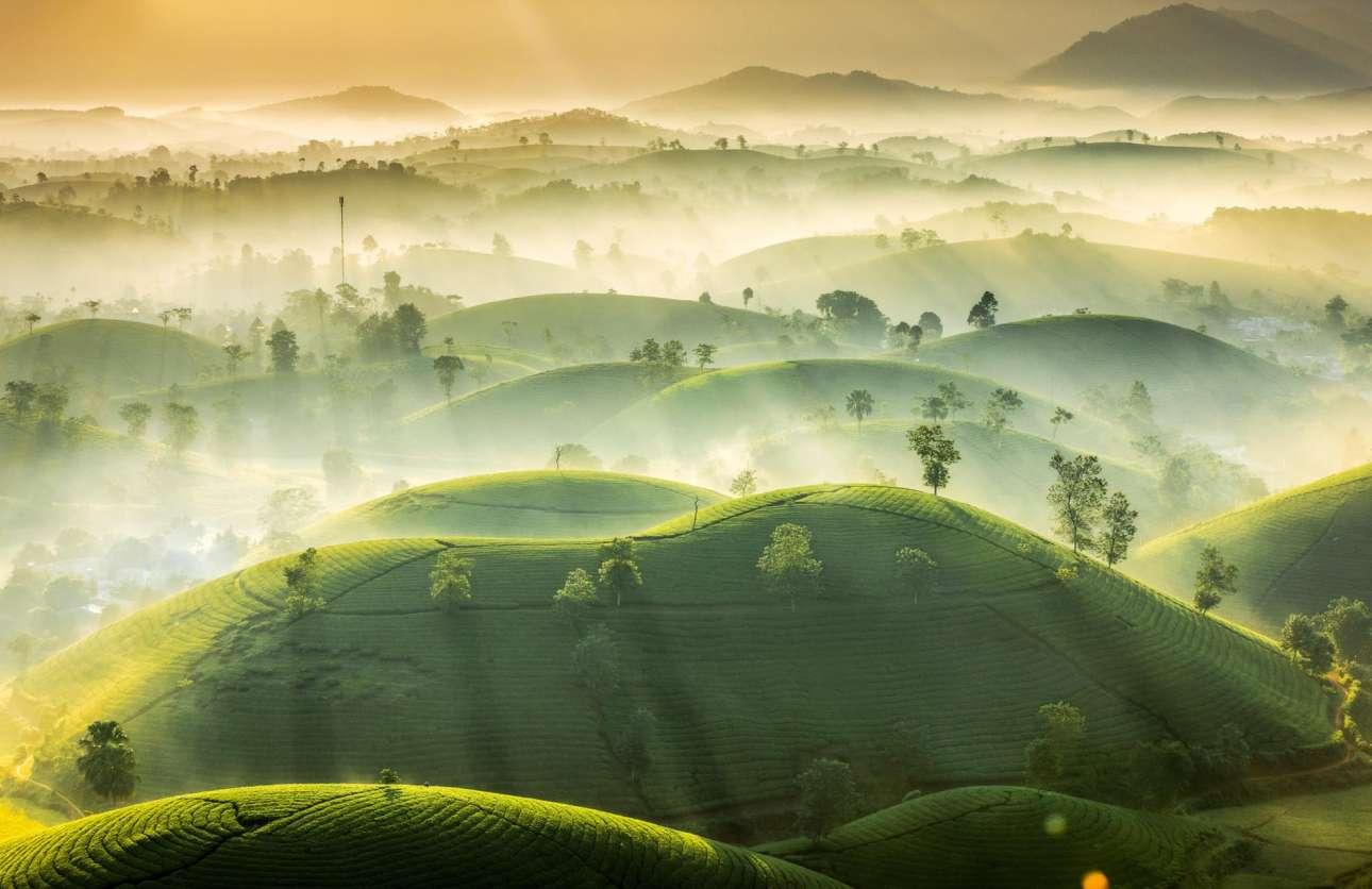 Πρωινή ομίχλη λούζει τους λόφους τσαγιού στην επαρχία Phu Tho του Βιετνάμ