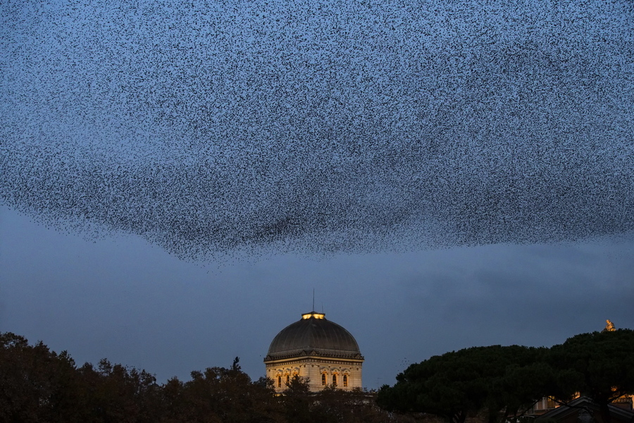 Σμήνος από ψαρόνια μαυρίζει τον ρωμαϊκό ουρανό ακριβώς πάνω από τη συναγωγή της Αιώνιας Πόλης