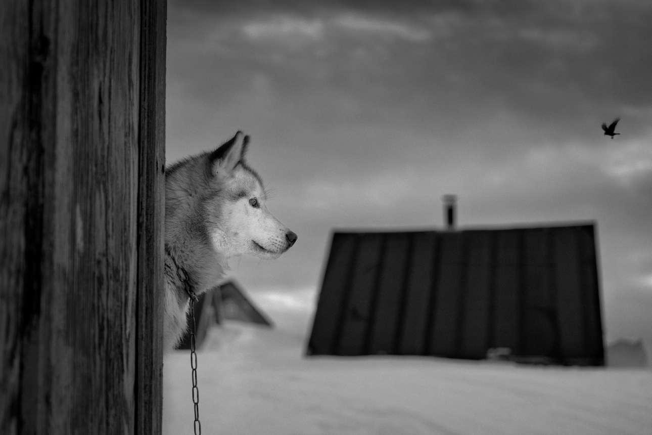 Ο Αξελσον γύριζε από χωριό σε χωριό της Γροιλανδίας προσπαθώντας να μαζέψει ιστορίες για κυνηγούς και σκύλους. Οπως λέει, στην αρχή ήταν δύσκολο για αυτούς να μιλήσουν και να φωτογραφηθούν μέσα στο αφόρητο κρύο , αλλά στη συνέχεια άρχισαν να ανοίγονται και να μοιράζονται απίθανες ιστορίες