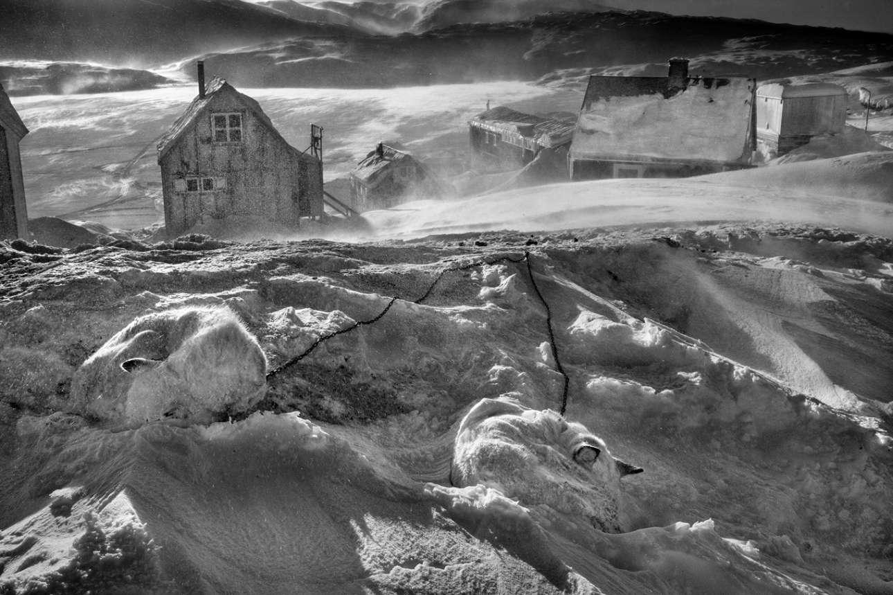 Το στρώμα πάγου που λιώνει στη Γροιλανδία διαταράσσει αμετάκλητα τον τρόπο ζωής 4.000 ετών των κυνηγών. Η σκληρή πραγματικότητα της υπερθέρμανσης του πλανήτη αποτελεί άμεση απειλή για την καθημερινή επιβίωση του σκύλου ελκήθρου της Γροιλανδίας
