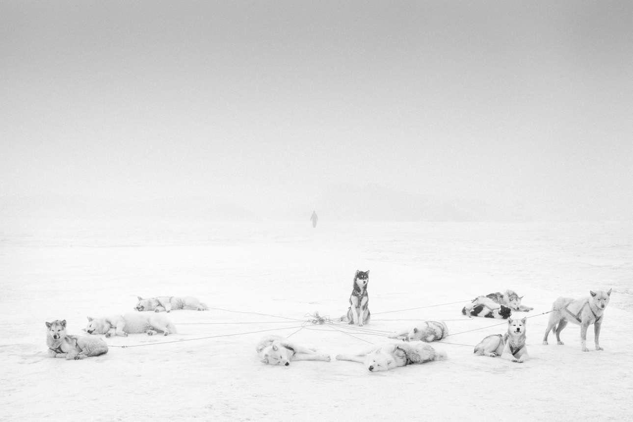 Μέσα από τις φωτογραφίες του, ο Αξελσον θέλει να μας ταξιδέψει στον στον κόσμο αυτών των ηρώων της Αρκτικής, «οι οποίοι έχουν επιβιώσει σε συνθήκες εξωγήινες και συνάμα συναρπαστικές για εμάς, σε έναν κόσμο γεμάτο κινδύνους, αλλά και σε μια φύση που σου κόβει την ανάσα»