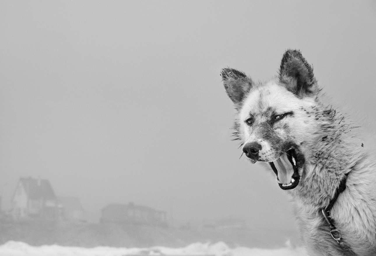 Για πάνω από σαράντα χρόνια, ο ισλανδός φωτογράφος Ράγκναρ Αξελσον φωτογραφίζει τους ανθρώπους, τα ζώα και το τοπίο των πιο απομακρυσμένων περιοχών της Αρκτικής, μαζί με την Ισλανδία, τη Σιβηρία και τη Γροιλανδία