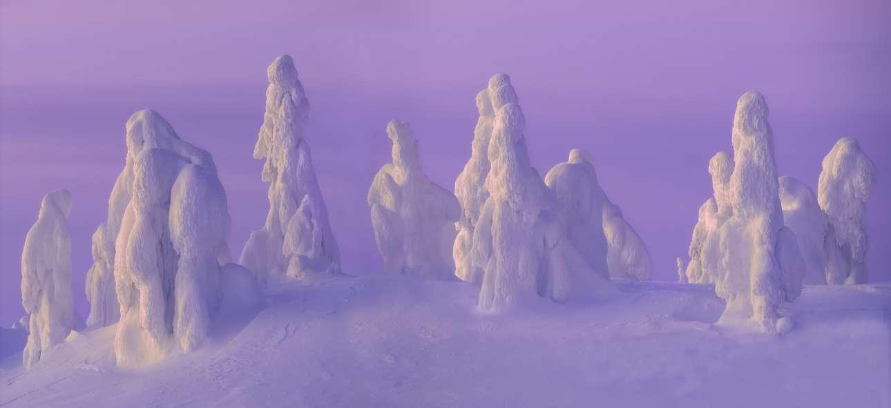 Τα χιονισμένα δέντρα στη φινλανδική περιοχή της Λαπωνίας, ξεχώρισαν στον διαγωνισμό. Η φωτογραφία ονομάστηκε «Φαντάσματα του Χιονιού» και αποτυπώνει εύστοχα το φαινόμενο