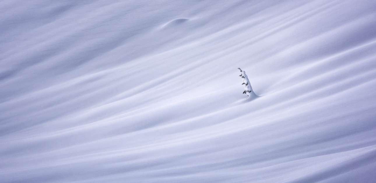 Ο καναδός φωτογράφος Ματ Τζάκις κέρδισε το πρώτο βραβείο στην κατηγορία «Φύση/Τοπίο» με αυτή την εικόνα από την ορεινή περιοχή Squamish που βρίσκεται βόρεια του Βανκούβερ. Η κορυφή ενός δέντρου είναι η μόνη που ξεπροβάλλει από το χιονισμένο πέπλο που έχει σκεπάσει τα πάντα. Ο φωτογράφος ονόμασε την εικόνα αυτή «Χειμερία Νάρκη της Φύσης»