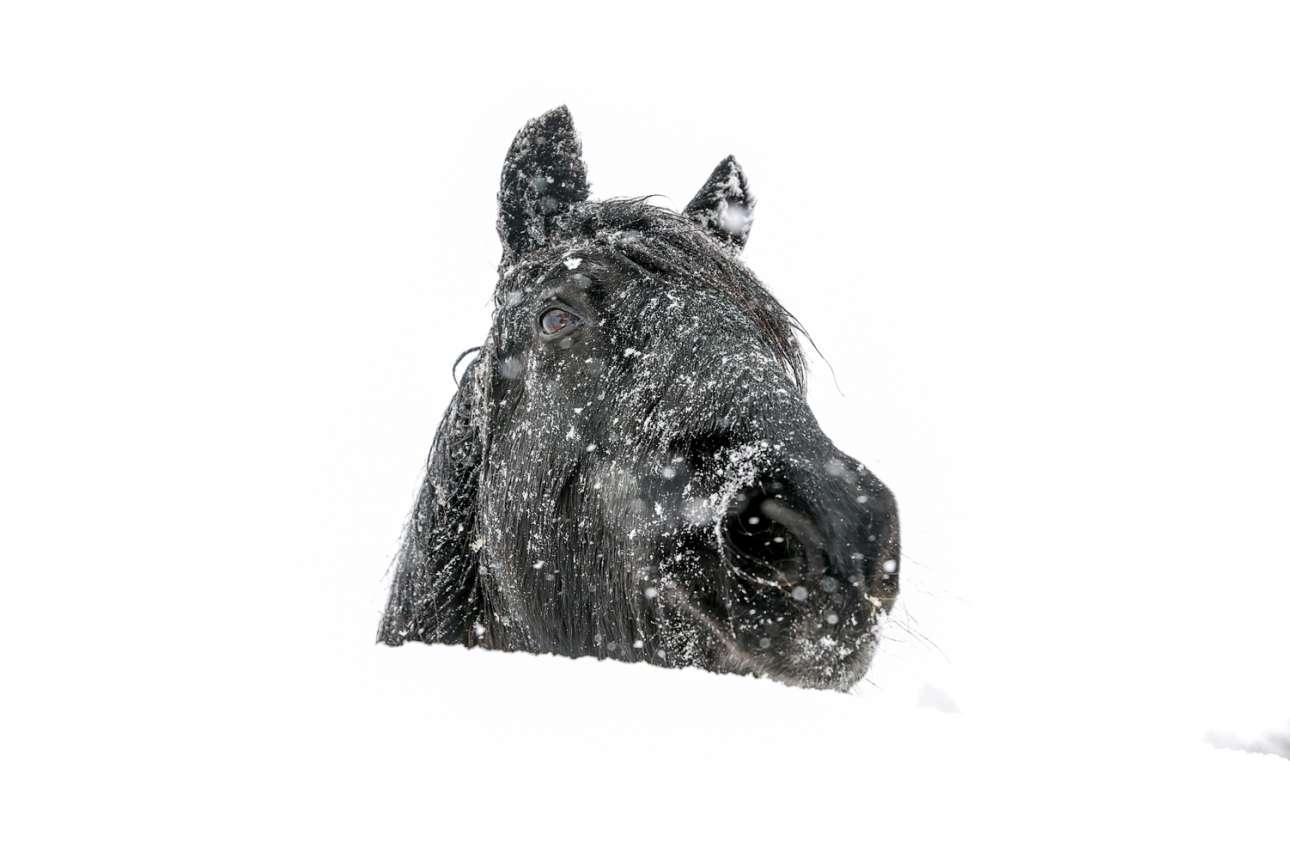 Ενα κεφάλι αλόγου προβάλλει ασώματο πίσω από τον όγκο του χιονιού που κάλυψε το λιβάδι στο Ντάραμ στη βόρεια Αγγλία. Ενα «μαφιόζικο» αλλά αναίμακτο καρέ από τον έξυπνο φωτογράφο