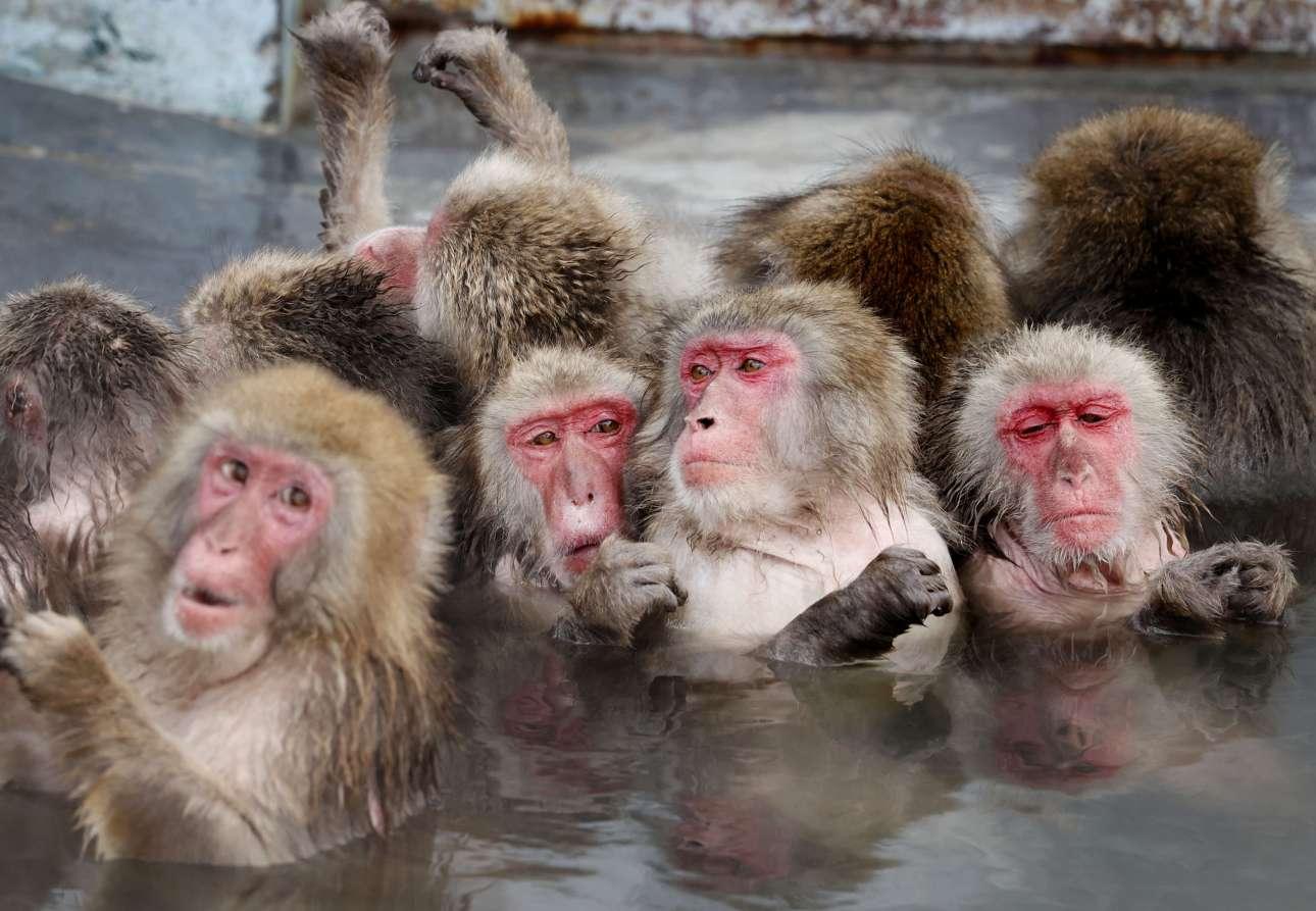 Γιαπωνέζικες μαϊμούδες ζεσταίνονται σε νερά θερμής πηγής στο Χοκάιντο