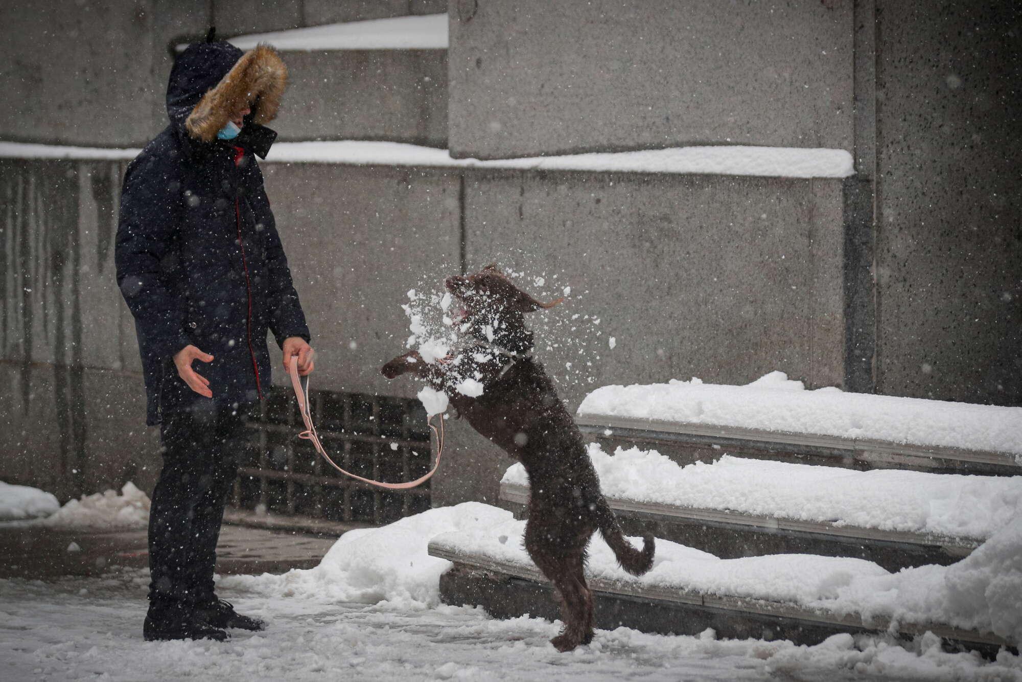 Οταν ο σκύλος έχει χιούμορ και αγαπάει το παιχνίδι, όλα επιτρέπονται...