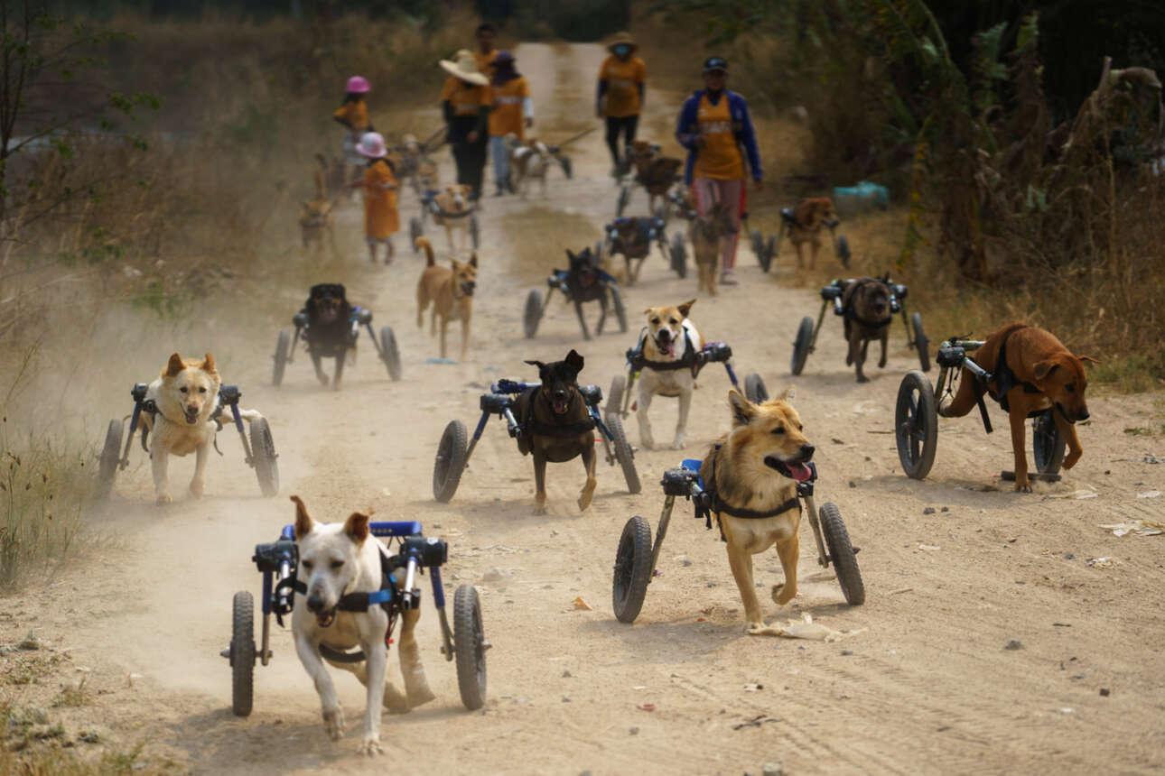 Ταϊλάνδη. Και τα ανάπηρα, ακρωτηριασμένα σκυλιά θέλουν να τρέξουν – με τα κατάλληλα σύνεργα και με αγάπη ασύλληπτη (όχι μόνο από την κάμερα) δείχνουν να τα καταφέρνουν
