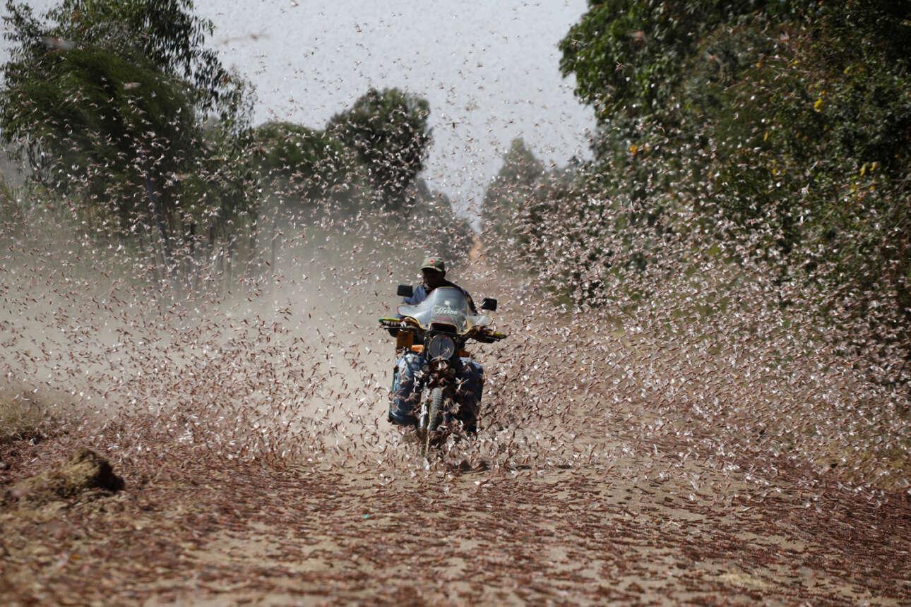 Μοτοσυκλετιστής έρχεται αντιμέτωπος με ένα σμήνος ακρίδων της ερήμου κάπου στην Κένυα – και ο φωτογράφος, βέβαια