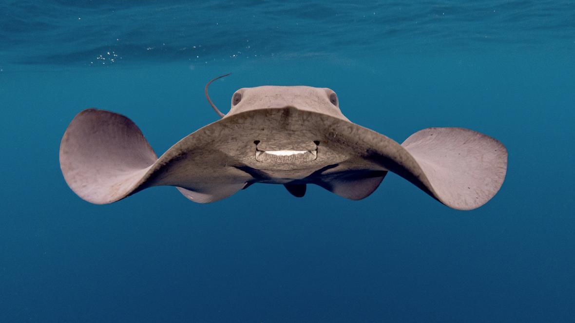 Αυτή η φωτογραφία που ονομάστηκε «Πελαγίσιο Σαλάχι» κατέκτησε την τρίτη θέση στην κατηγορία Compact. Τραβήχτηκε το περασμένο καλοκαίρι στην περιοχή Bermeo της Ισπανίας από τον Αζάια Κρουζ κατά τη διάρκεια κατάδυσης για τη φωτογράφηση καρχαριών. Ενώ τον είχαν πλησιάσει τρεις γαλάζιοι καρχαρίες έκανε την εμφάνιση του το εικονιζόμενο σαλάχι, ένα είδος που δεν έχει καταγραφεί άλλη φορά σε αυτή την θαλάσσια περιοχή