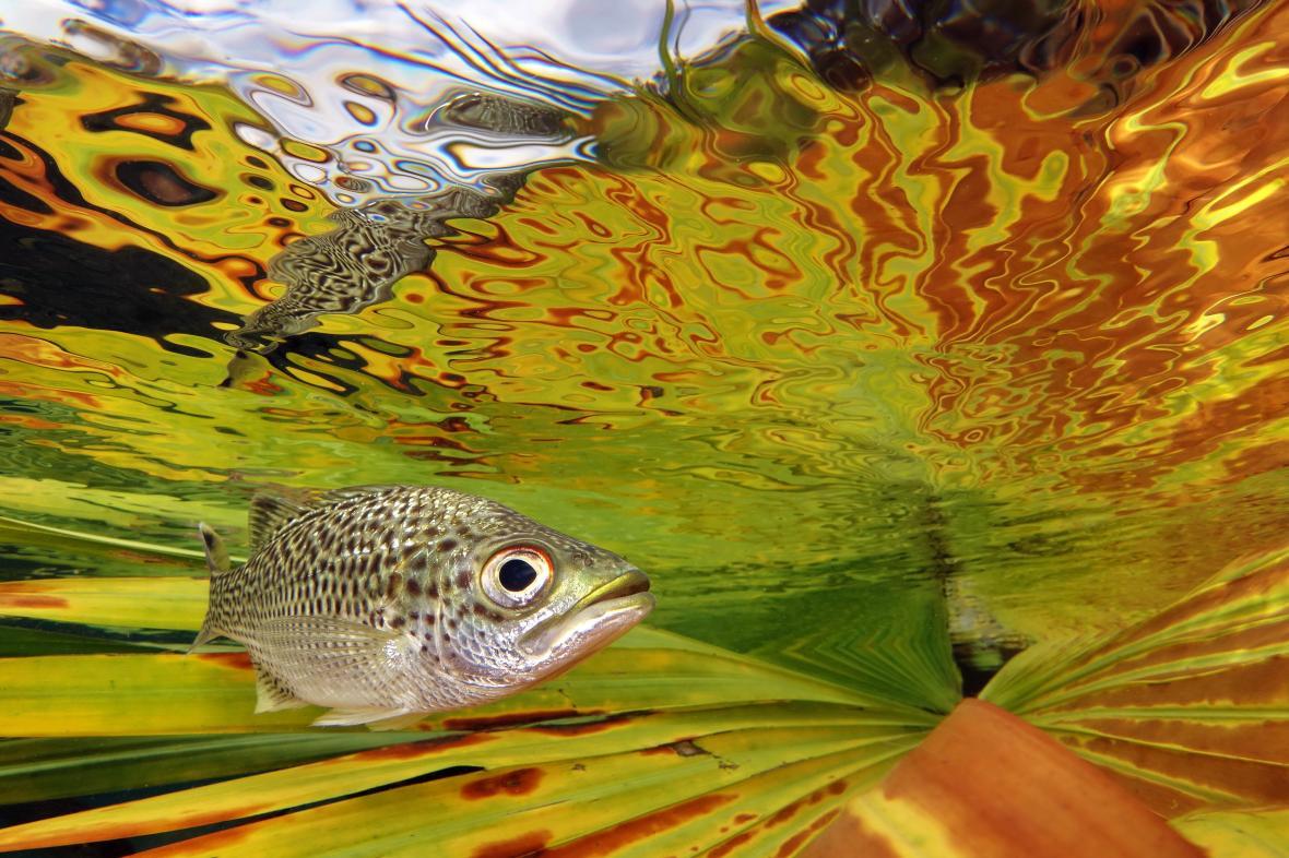 Νικητής στην κατηγορία «Compact» είναι ο Τζακ Μπερτομιέρ με μια εντυπωσιακή εικόνα μέσα από το νερό ενός ποταμού στην Νέα Καληδονία με το ρεύμα να έχει υποχρεώσει κυπρίνους να κινηθούν κοντά στην επιφάνεια μέσα σε ένα έντονο πολύχρωμο και οπτικά χαοτικό περιβάλλον. Η φωτογραφία ονομάστηκε «Κοντά στην Επιφάνεια»