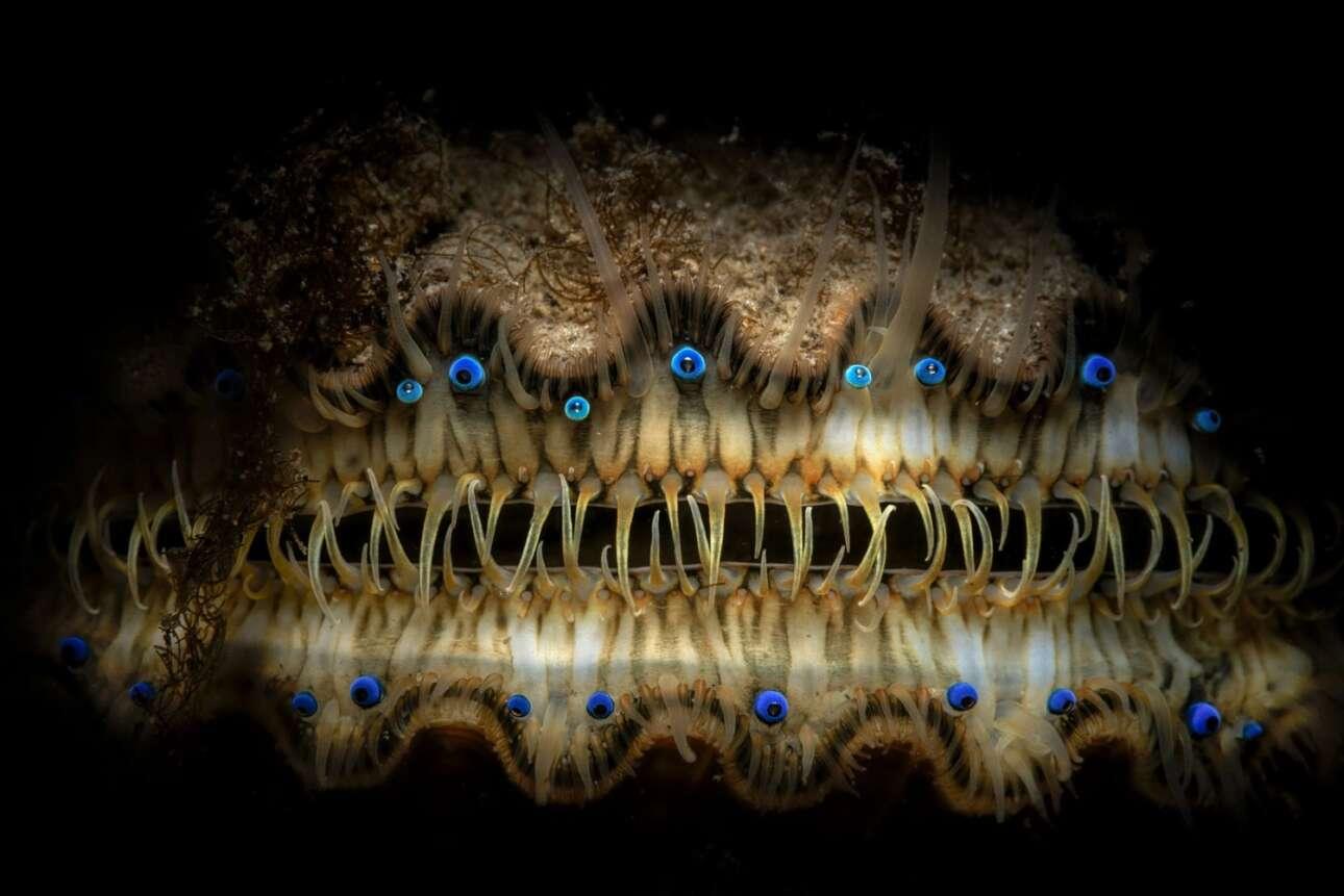 Στην κατηγορία «Πορτρέτο» διακρίθηκε το… πορτρέτο ενός οστρακοειδούς. Πρόκειται για ένα χτένι στο βυθό της περιοχής Fort Wetherill στο Rhode Island των ΗΠΑ. Ανάμεσα στα διάφορα χαρακτηριστικά του χτενιού ξεχωρίζει η συστοιχία των μπλε ματιών του
