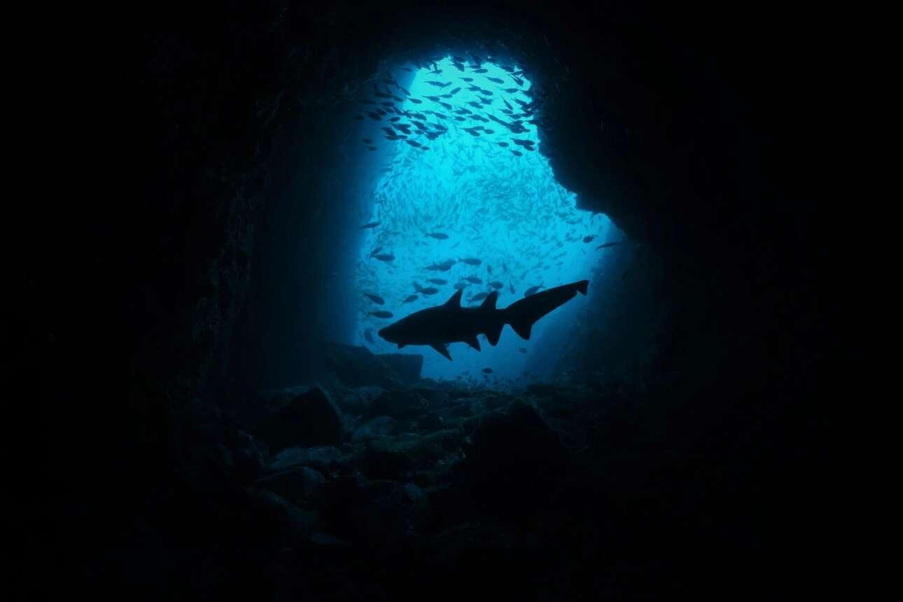 Δεύτερη θέση στην κατηγορία Compact Wide Angle κέρδισε μια φωτογραφία από ένα από τα δημοφιλέστερα σημεία κατάδυσης στην Αυστραλία, το Fish Rock Cave. Αυτό το σημείο αποτελεί περιοχή που ο καρχαρίας γκρι τροφός κυριαρχεί και κυκλοφορούν πάντοτε κατά πολλές δεκάδες τα μέλη του είδους. Ομως σε μια κατάδυση της η Τζοάνα Τσεν οι καρχαρίες είχαν εξαφανιστεί και κάποια στιγμή εντόπισε έναν να κολυμπά μόνος του ανάμεσα σε άλλα ψάρια γεγονός που της τράβηξε την προσοχή και αποφάσισε να καταγράψει την σκηνή