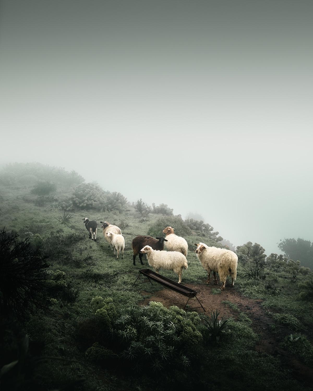 Ο Θεόδωρος Απειρανθίτης αποτύπωσε στον φακό του ένα κοπάδι προβάτων να βόσκουν μέσα σε ένα ομιχλώδες τοπίο. Ονόμασε την φωτογραφία «Foggy Farming» και κέρδισε ένα από τα βραβεία του διαγωνισμού.