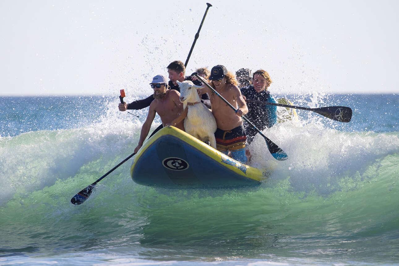 ΗΠΑ. Παρέα Αμερικανών σέρφερ παίζουν με τα κύματα και με τις σέλφι σε μία ακτή της Καλιφόρνιας – η κατσίκα αγέρωχη, και συγκλονίζει