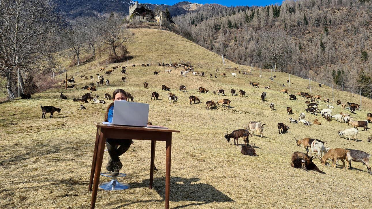 Ιταλία. H πιτσιρίκα λέγεται Φιαμέτα, πες την και Φλογίτσα, και κάνει διαδικτυακά μαθήματα στο Καλντές, στην ορεινή βόρεια Ιταλία, ενώ γύρω της βόσκουν οι κατσίκες του μπαμπά της – αυτές «έχουν σπουδάσει την κατσικωσύνη μια ολόκληρη αιωνιότητα», όπως λέει και ο ποιητής Γιάννης Υφαντής
