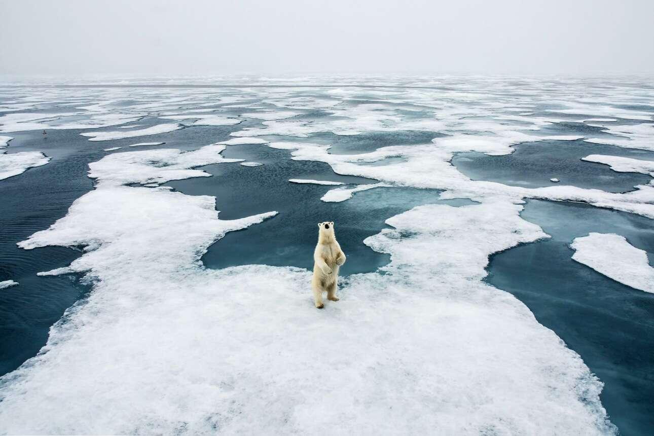 Βραβείο στην κατηγορία Πολικό: μία πολική αρκούδα στην Αρκτική κοιτάζει με απορημένο ύφος τον φακό