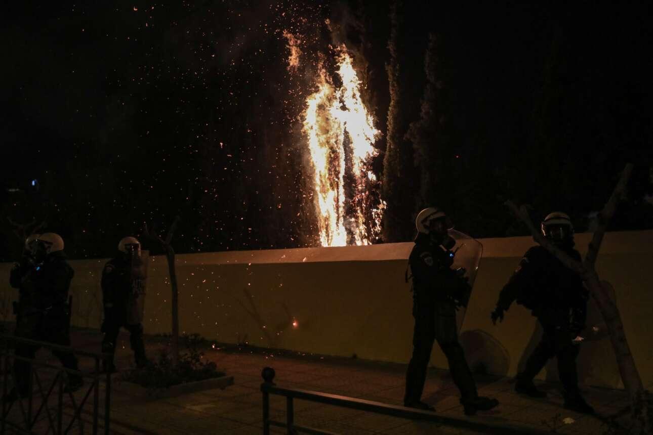 Τα υπέροχα κυπαρίσια του Ιωσηφόγλειου παραδόθηκαν στις φλόγες από τη μανία των κουκουλοφόρων με τις μολότοφ