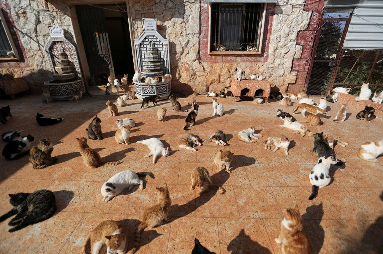Συρία. Μπορεί εκεί να έγινε «εμφύλιος» που χώρεσε τον μισό πλανήτη, όμως οι γάτες έχουν ακόμη το άσυλό τους - στο Ιντλίμπ τουλάχιστον