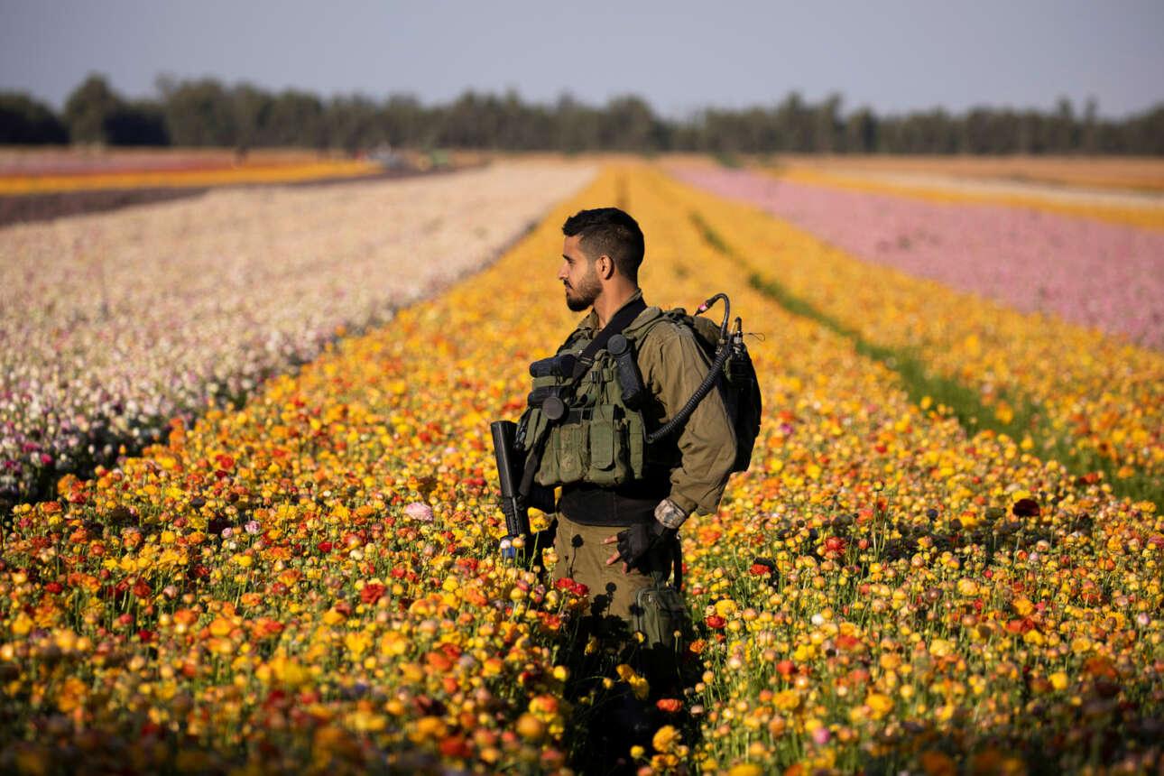Ισραήλ. Κιμπούτς φυλάει αυτός ο πεζικάριος, επειδή γειτνιάζει με την παλαιστινιακή Λωρίδα της Γάζας. Τα χωράφια με τις καλλιέργειες ανθέων δεν είναι και η καλύτερη θέση για κάλυψη, πάντως «γράφουν» καλό φωτογραφικό κοντράστ με το αυτόματο όπλο και την εξάρτυση μάχης