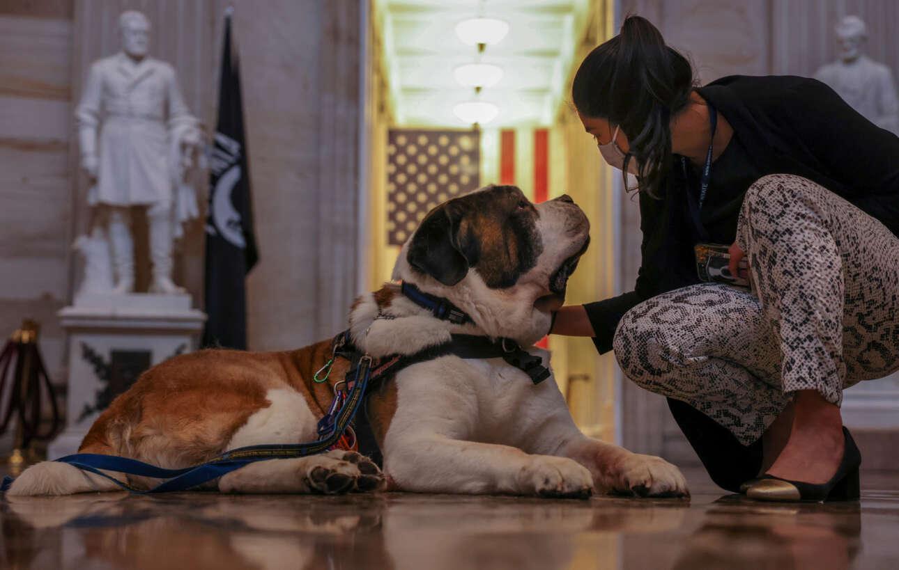 ΗΠΑ. Κλάρενς φωνάζουν τον εικονιζόμενο σκύλο που προσφέρει τις υπηρεσίες του στο αστυνομικό τμήμα της Μασαχουσέτης και ειδικεύεται στην παροχή βοήθειας σε σοβαρά περιστατικά. Πετάχτηκε μέχρι την Ουάσινγκτον για την κηδεία του αστυνομικού Εβανς που σκοτώθηκε στο τελευταίο περιστατικό βίας στο Καπιτώλιο