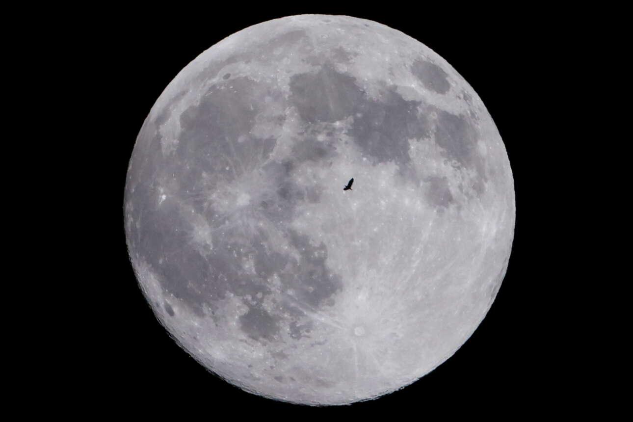 Ενα πουλί πετά μπροστά από την εντυπωσιακή υπερ-Σελήνη στη Σανγκάη