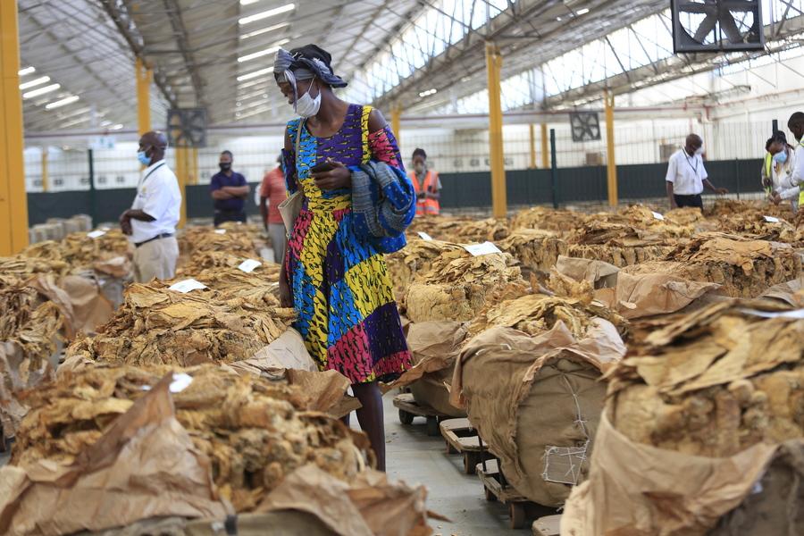 Καρέ από την αγορά καπνού στο Χαράρε της Ζιμπάμπουε. Οι αγρότες πωλούν τη σοδειά τους, υπό περιοριστικά μέτρα εξαιτίας της πανδημίας. Ο καπνός είναι το βασικό εξαγώγιμο προϊόν της αφρικανικής χώρας