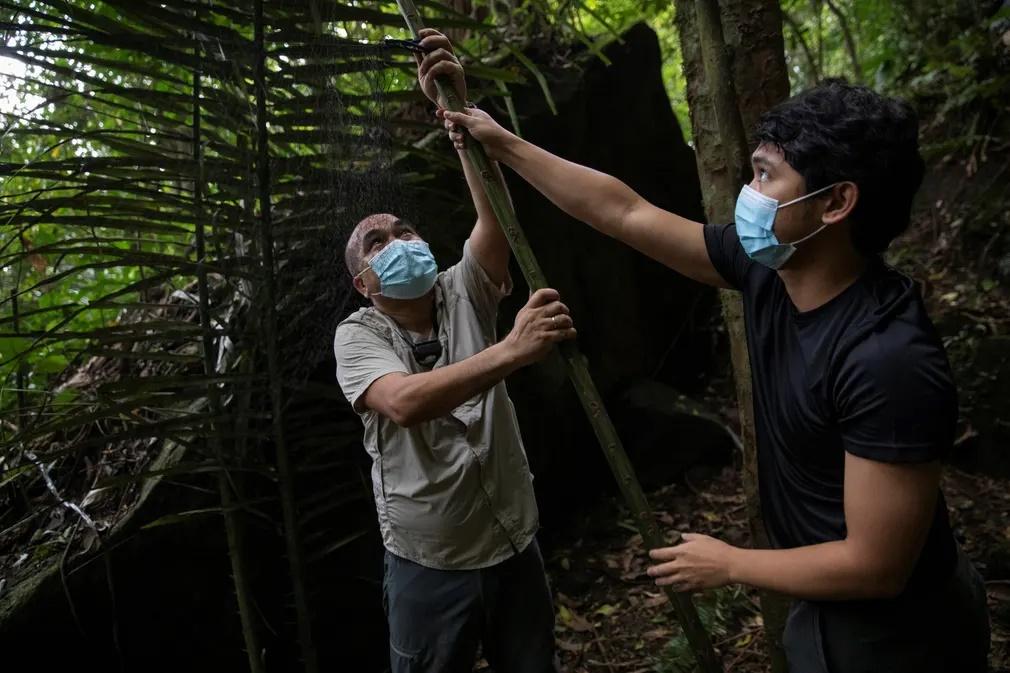 Ο Φίλιπ Αλβιόλα και ο Κερκ Ταράι στήνουν ένα δίχτυ αιχμαλωτισμού νυχτερίδων. «Στόχος μας είναι να καταγράψουμε όλα τα είδη νυχτερίδων στις Φιλιππίνες καθώς και τους ήχους που κάνει το κάθε είδος» δηλώνει ο Ταράι