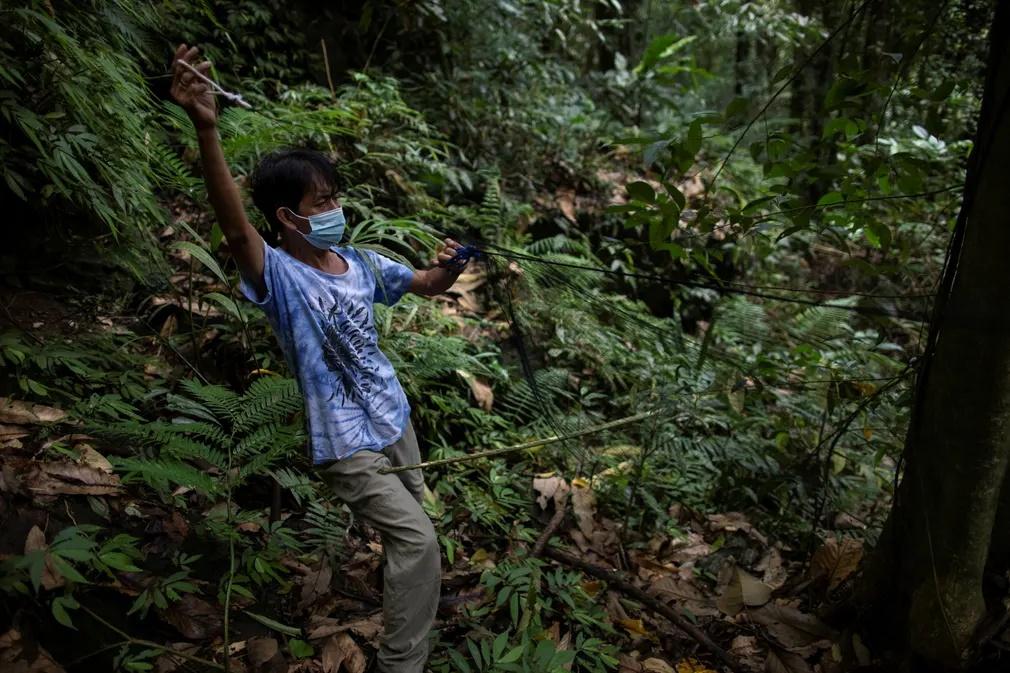 Ένας από τους ερευνητές τοποθετεί ένα δίχτυ στο δάσος για να αιχμαλωτίσει νυχτερίδες