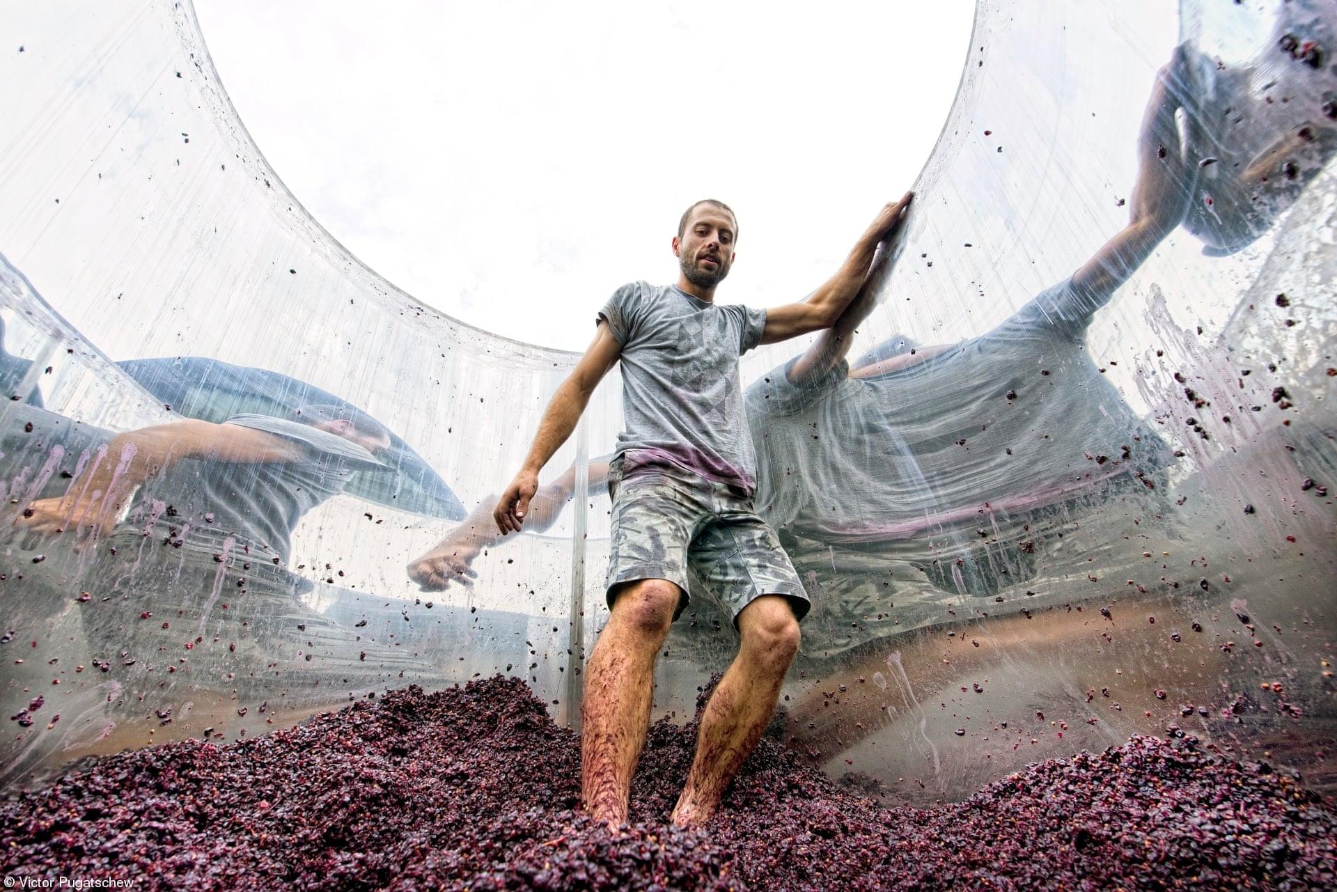 «Errazuriz People: Πατώντας το Pinot Noir» του Βίκτορ Πούγκατσιου, Αυστραλία. Πάτημα σταφυλιών της ποικιλίας Pinot Noir στη δεξαμενή του αμπελώνα Hoddles Creek
