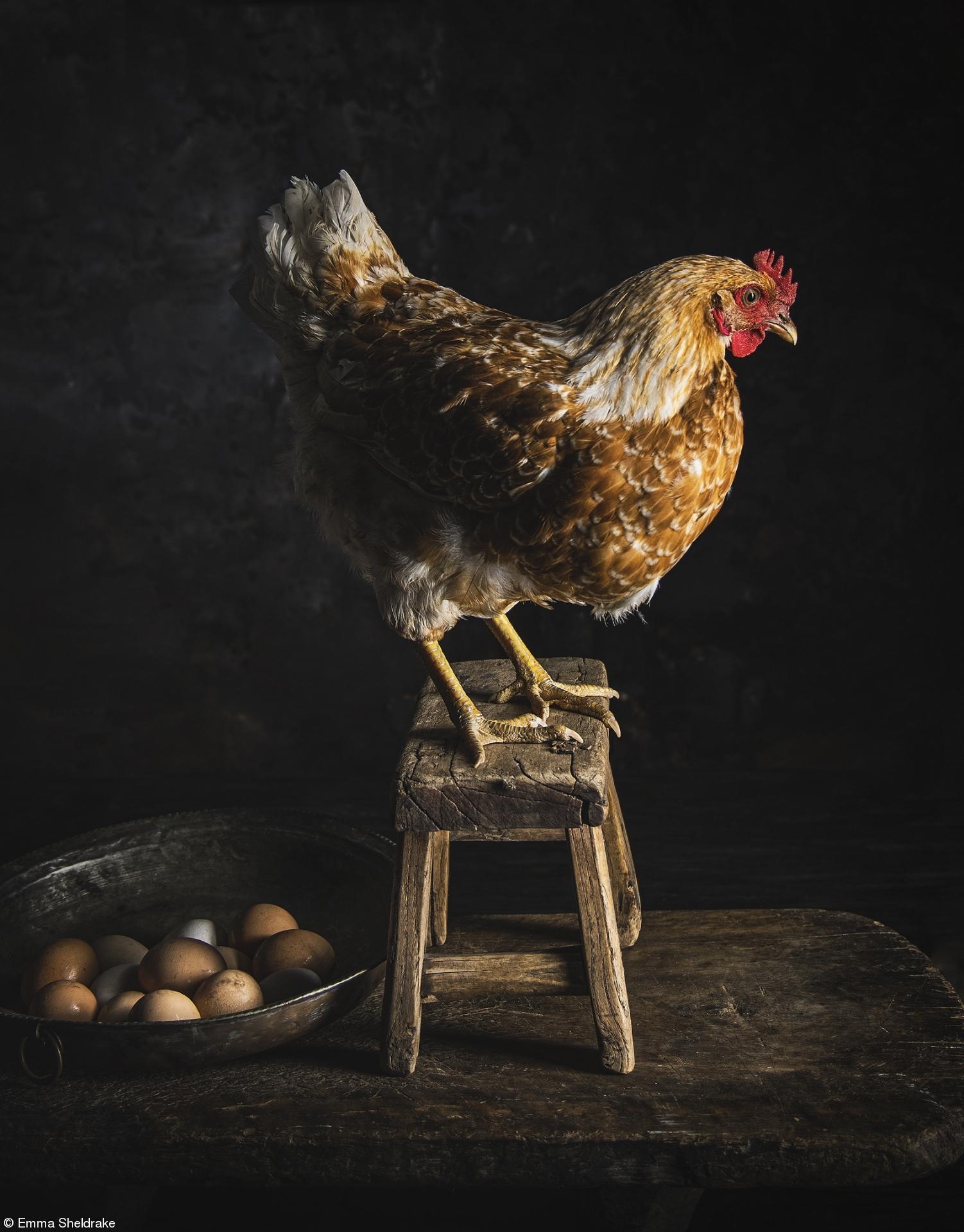 «Ενα Οραμα με την Αφροκρεμα της Σοδειάς: Κανέλα» της Εμα Σελντρέικ, Αυστραλία. Η ομορφιά της συλλογής των αβγών στο σπίτι και τα υπέροχα πτηνά που λατρεύονται σαν μέλη της οικογένειας