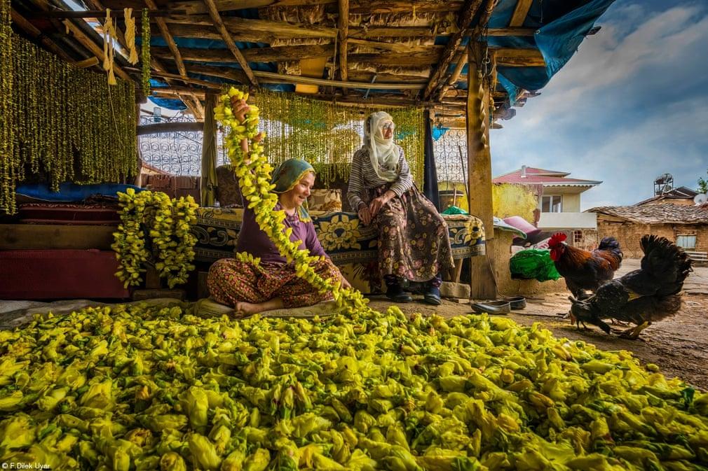 «Φέρτε στο σπίτι τη συγκομιδή: Ξεραίνοντας  τις μπάμιες» της Φ Ντιλέκ Ουγιάρ, Τουρκία. Στο Τοκάτ της Τουρκίας οι γυναίκες μαζεύουν λουλούδια μπάμιας από τα χωράφια και τα περνάνε σε σχοινί. Όταν ξεραθούν, τα λουλούδια πέφτουν και οι μπάμιες είναι έτοιμες να μαγειρευτούν τον  χειμώνα