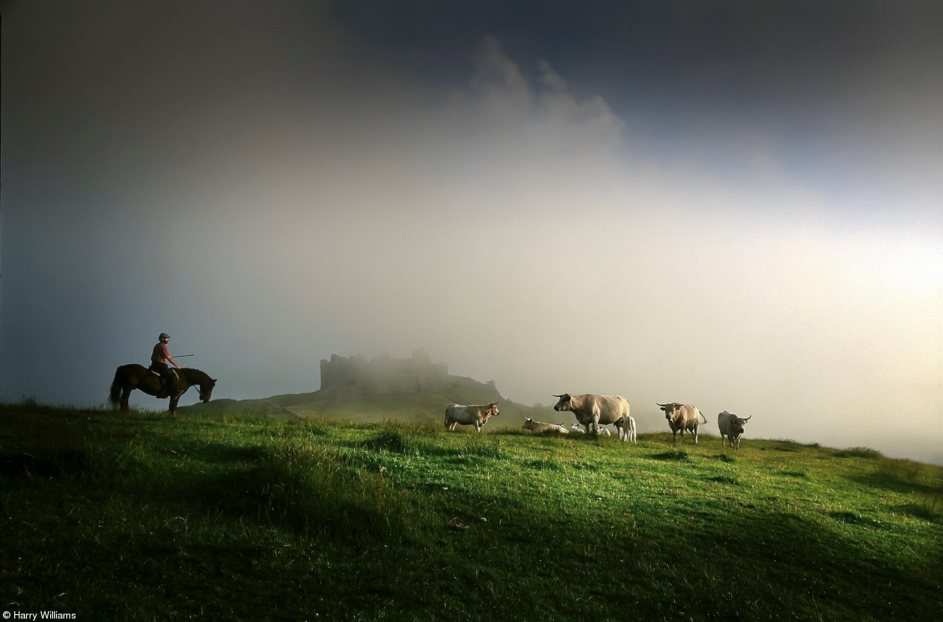«Φαγητό στο χωράφι: Κτηνοτρόφος με βόδια της ράτσας Longhorn», του Χάρι Γουίλιαμς, Ηνωμένο Βασίλειο. Ενας κτηνοτρόφος στο άλογό του παρακολουθεί το κοπάδι με τα βόδια της σπάνιας ράτσας Longhorn στη σκιά ενός κάστρου στην ομίχλη