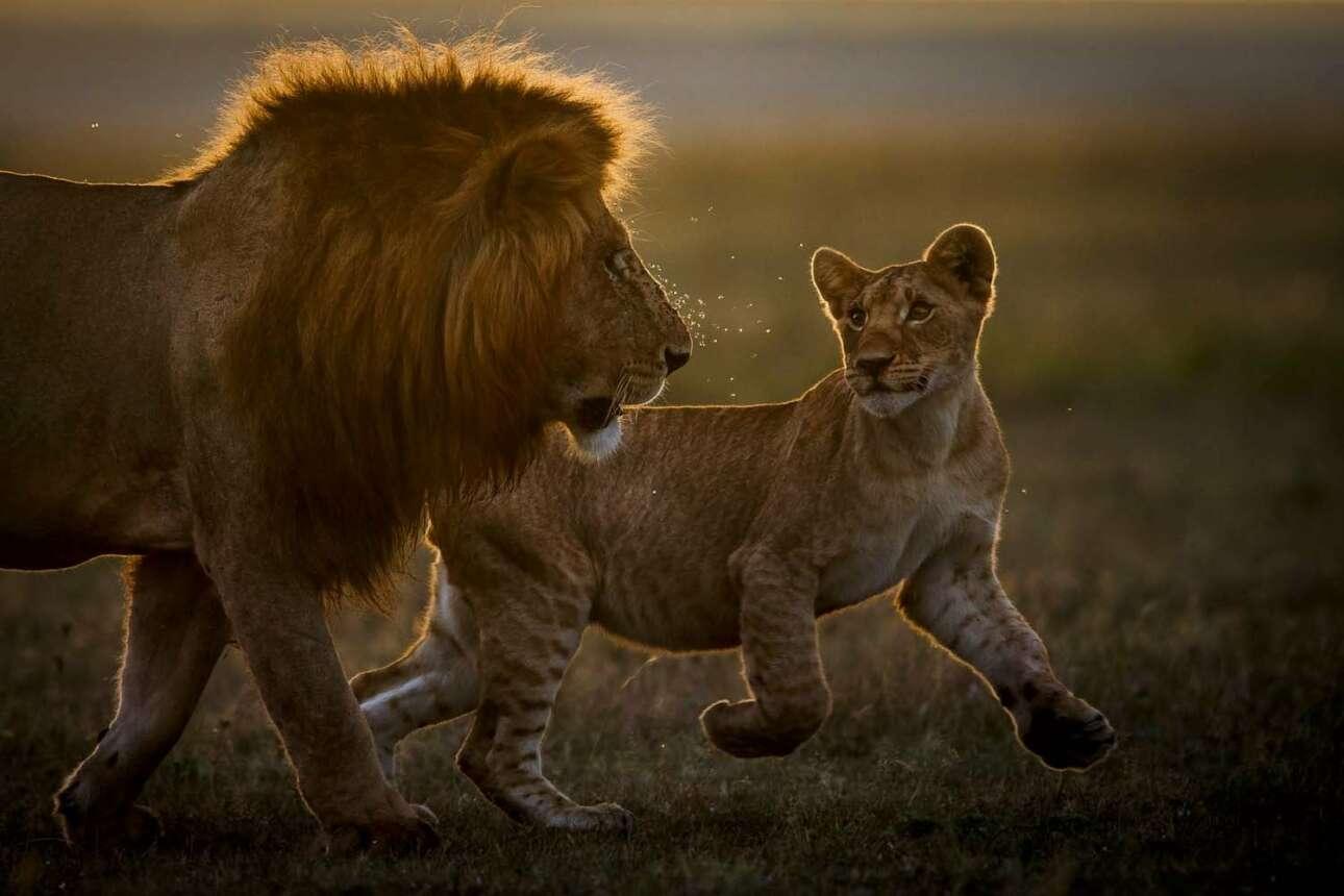 «Ο Βασιλιάς και ο ανόητος αυλικός του» ο τίτλος της φωτογραφία που βραβεύτηκε στην κατηγορία Θηλαστικά