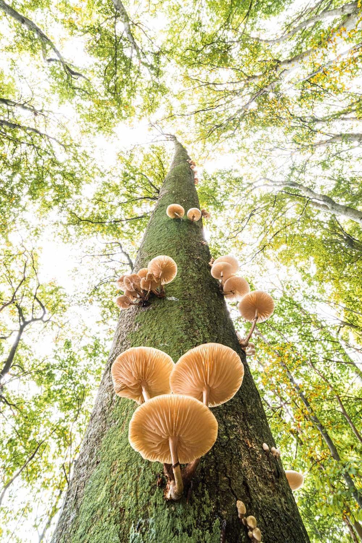 Η εντυπωσιακή ευρυγώνια λήψη η οποία δείχνει μανιτάρια που φυτρώνουν πάνω σε ένα δέντρο απέσπασε το πρώτο βραβείο στην κατηγορία Φυτά και Μύκητες