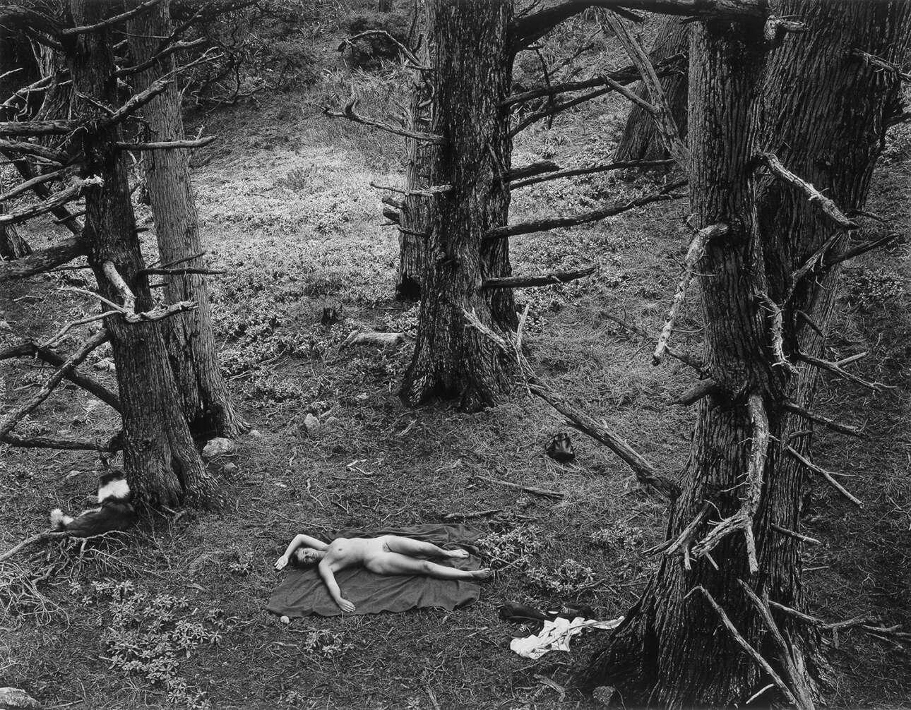 «Γυναίκα και Σκύλος στο Δάσος», 1953. Αυτό που αποτυπώνεται στις φωτογραφίες του Μπούλοκ,  είναι ένα όραμα για ανθρώπους φωλιασμένους μέσα σε έναν φυσικό κόσμο που είναι ταυτόχρονα θαυμάσιος και μυστηριώδης