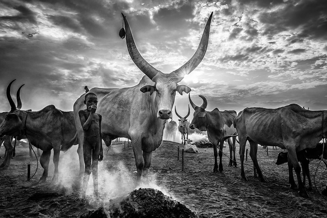 «Ο νεαρός κτηνοτρόφος»,  βραβείο «Black & White Travel Photo of the Year 2021». Αγόρι της φυλής Μουντάρι με το κοπάδι του στο Νότιο Σουδάν. Οι Μουντάρι εκτρέφουν βοοειδή και τίποτα δεν είναι πιο σημαντικό στη ζωή τους από τα ζώα τους. Τις περισσότερες δουλειές στα βοσκοτόπια, όπου κοιμούνται μαζί με τα βόδια τους, τις κάνουν τα παιδιά.