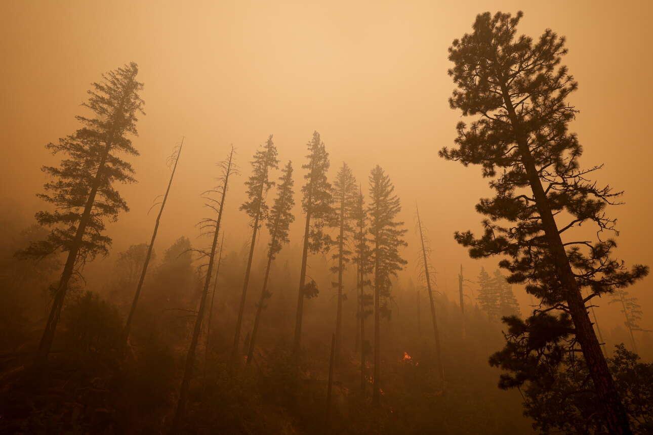 Μικροεστίες, «καντηλάκια», ανάμεσα στα καμένα δέντρα στην περιοχή Κίμπουρτς