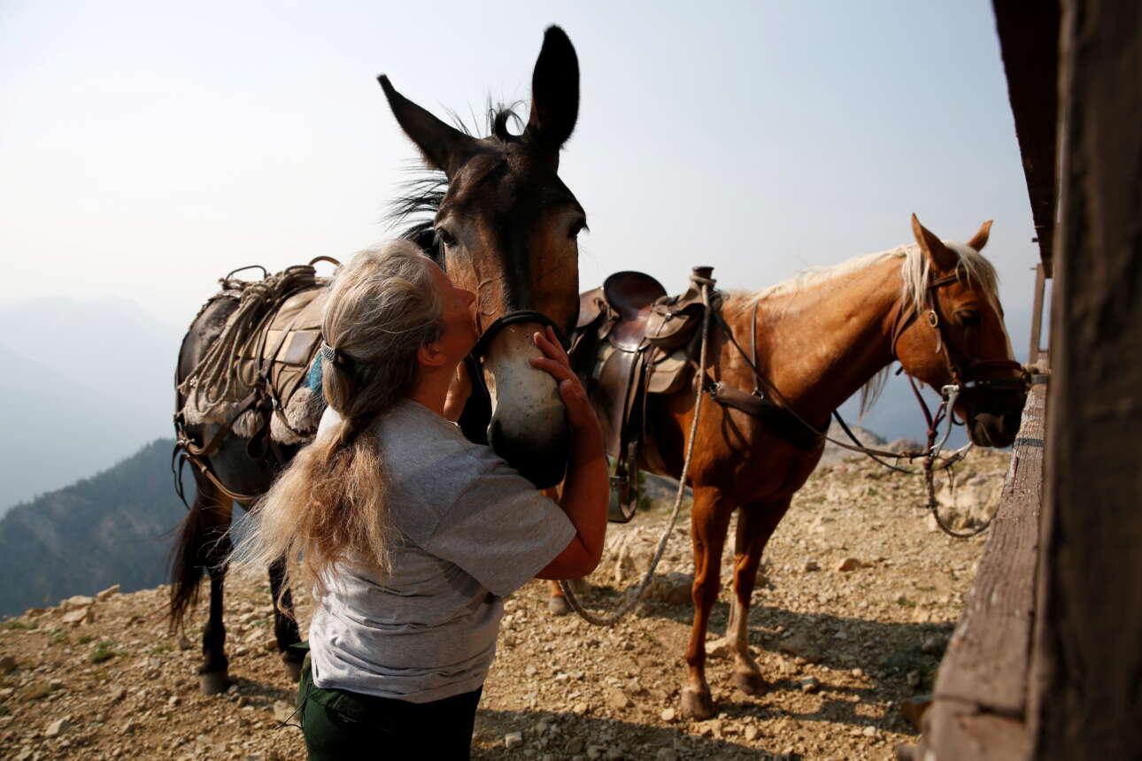 Η μοναχική γυναίκα χαϊδεύει τρυφερά τα άλογα με τα οποία φτάνουν τα εφόδια στο πυροφυλάκιο όπου μένει ολομόναχη τους καλοκαιρινούς μήνες