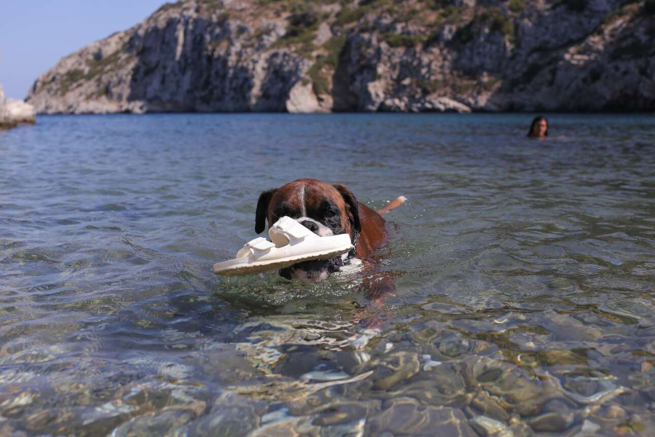 Και ένας αποχαιρετισμός του καλοκαιριού από το σκυλί που λατρεύει τη θάλασσα -και τις σαγιονάρες- στην Ικαρία