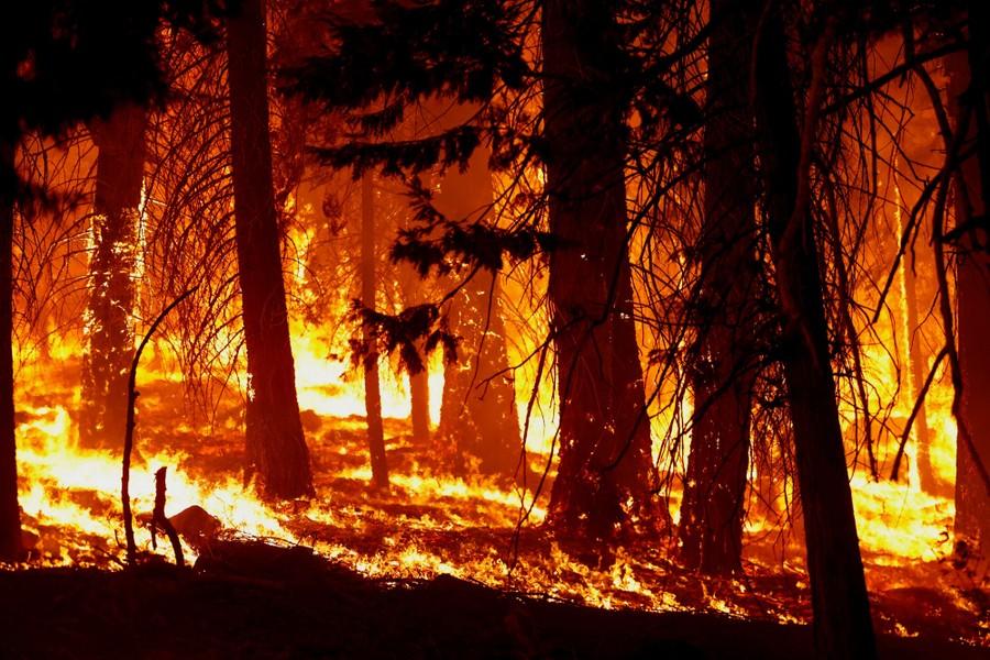 Δάσος που καίγεται στην περιοχή Στρόμπερι
