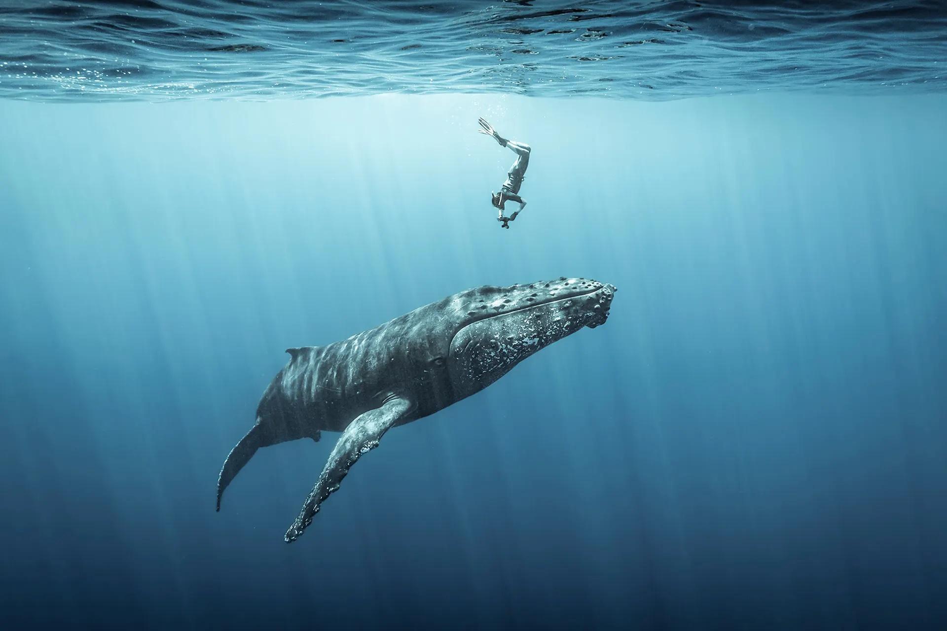 Την τρίτη θέση στην κατηγορία «Εξερευνητής Φωτογράφος Ωκεανού» πήρε η φωτογραφία που δείχνει έναν δύτη να έχει πλησιάσει μια μεγάπτερη φάλαινα στο νησί Réunion στον Ινδικό Ωκεανό