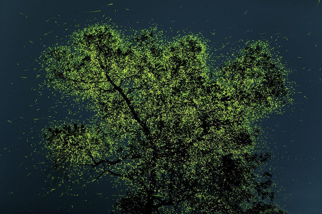 Ο Πραταμές Γκαντεκάρ από την Ινδία κέρδισε το βραβείο People's Choice. «Λίγο πριν από τους μουσώνες, αυτές οι πυγολαμπίδες συγκεντρώνονται σε ορισμένες περιοχές της Ινδίας. Σε κάποια δέντρα όπως αυτό της φωτογραφίας σε απίστευτους αριθμούς, ίσως μερικά εκατομμύρια. Η συγκεκριμένη εικόνα είναι μια «στοίβα» 32 λήψεων (έκθεση 30 δευτερολέπτων η κάθε μία) αυτού του δέντρου. Αργότερα οι εικόνες στοιβάζονται η μία πάνω στην άλλη με τη βοήθεια του Photoshop. Αυτή η εικόνα περιέχει 16 λεπτά χρόνου προβολής αυτού του καταπληκτικού δέντρου» εξηγεί ο φωτογράφος